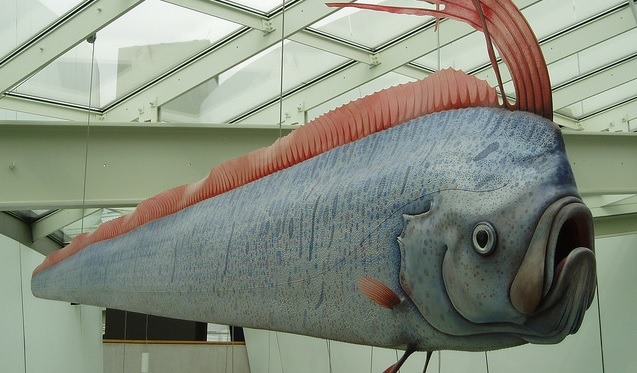 analisis ilmiah oarfish